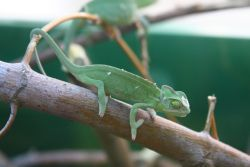 http://www.kameleon.hupont.hu/felhasznalok/8641/kepfeltoltes/hjfgjz1.jpg