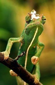 http://www.kameleon.hupont.hu/felhasznalok/8641/kepfeltoltes/kep.jpg